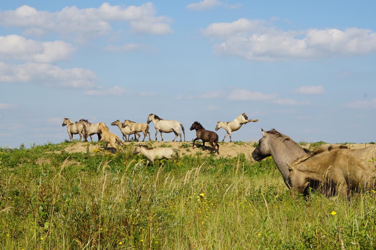 Paard Ark Natuurontwikkeling