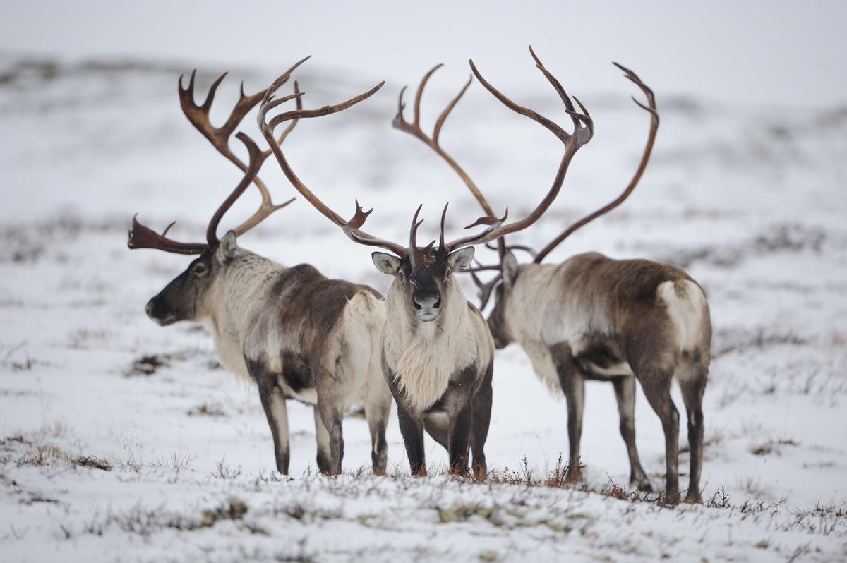 Groeneveldlezing Online Ark Natuurontwikkeling