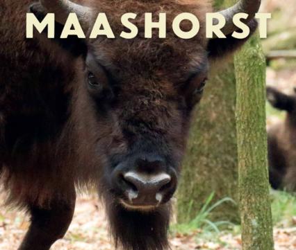 ARK Natuurontwikkeling op de Maashorst 2013-2019