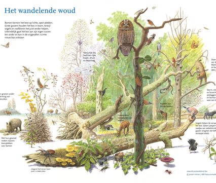 Het wandelende woud