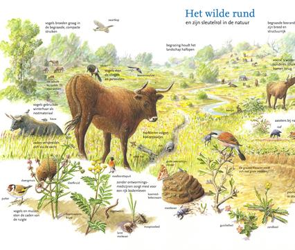 Wilde rund en zijn sleutelrol in de natuur