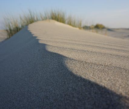 Primaire duinen
