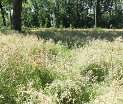 Natuurgebied Het Groene Woud in Brabant. Foto: Marjolein van Haaren