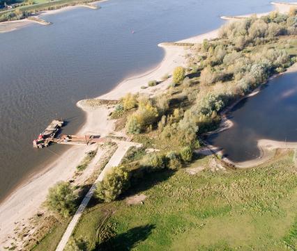 Spontaan ooibos in de Gendtse Waard, foto: Beeldbank Rijkswaterstaat Joop van Houdt