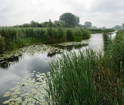 Rijnstrangen. Foto: Twan Teunissen
