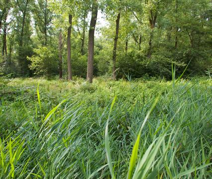 Edelhertgebied in Het Groene Woud