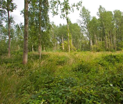 Het Groene Woud
