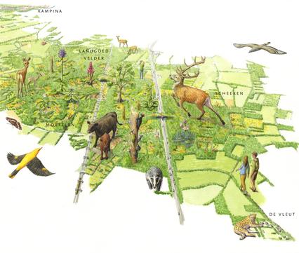 Toekomstbeeld Het Groene Woud