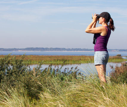 Vogels kijken bij het Haringvliet