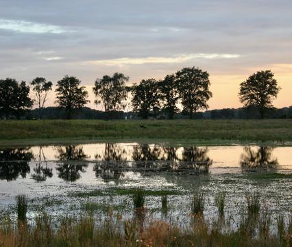Je ziet een bosomgeving met bomen en water waarin de bomen weerkaatst worden. De zon gaat onder.