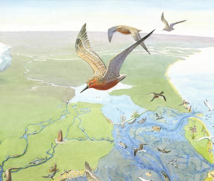 Waddenkaart, tekening: Jeroen Helmer