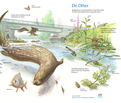 Boegbeeldtekening Otter