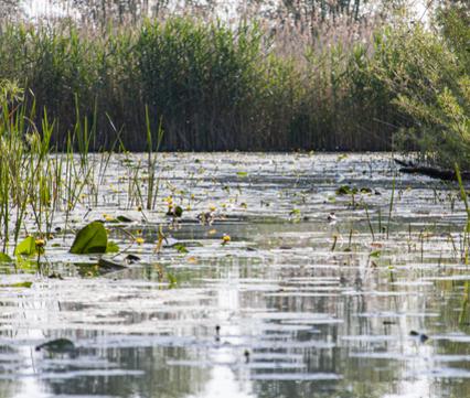 De Rijnstrangen vanaf het water. Foto: Mayke de Vos