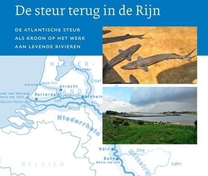 De steur terug in de Rijn