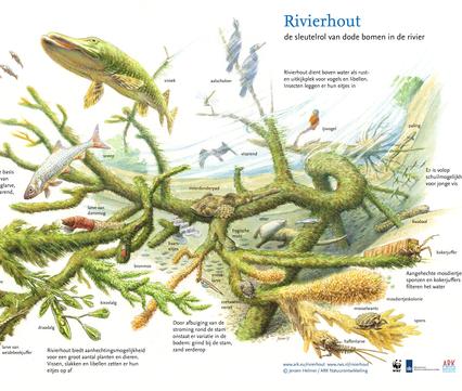 Sleutelrol Rivierhout