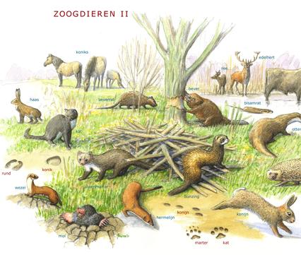 Zoekkaart zoogdieren