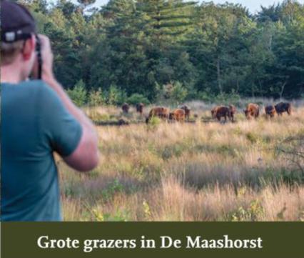 Folder grote grazers in de Maashorst