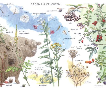Zoekkaart Zaden en Vruchten