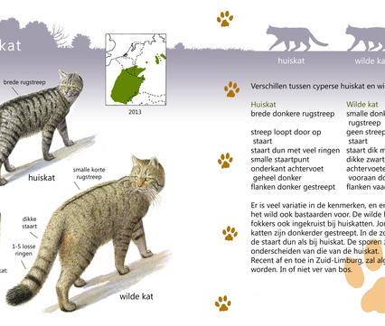 Roofdiergids wilde kat