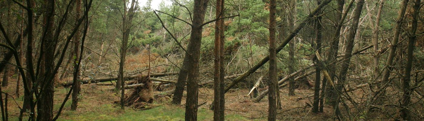 Bomen geveld door storm