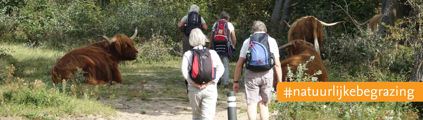 Wandelaars en Schotse hooglanders