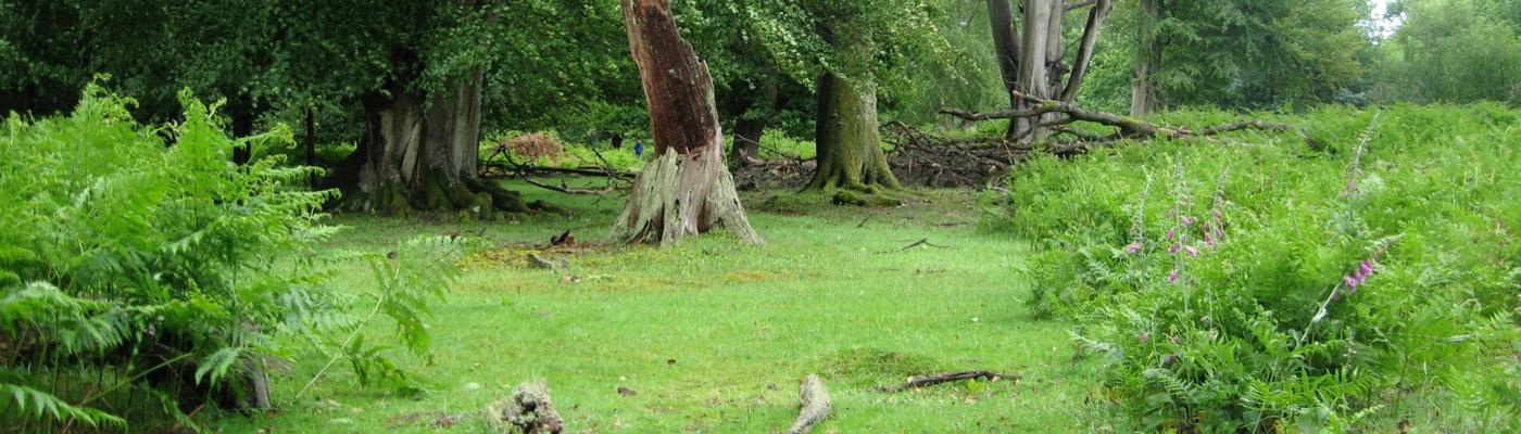 Van kort gras tot hoge bomen