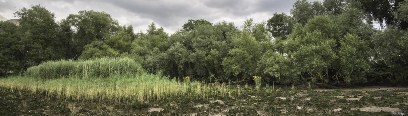 Eiland van Brienenoord, foto: Gert de Graaf