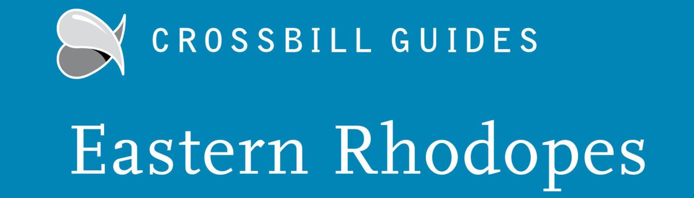 Crossbill Guide Eastern Rhodopes