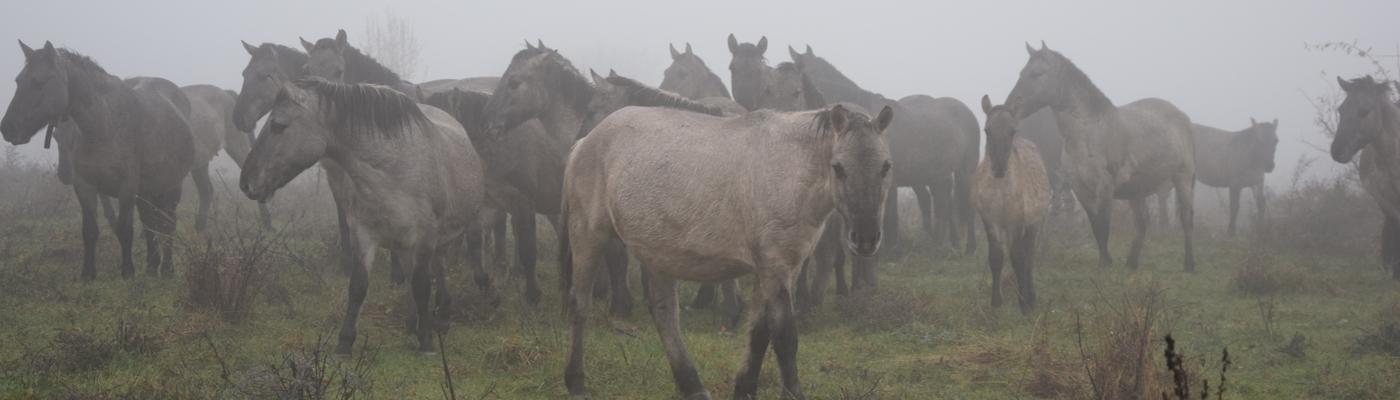 Wilde paarden in de Oostelijke Rhodopen van Bulgarije