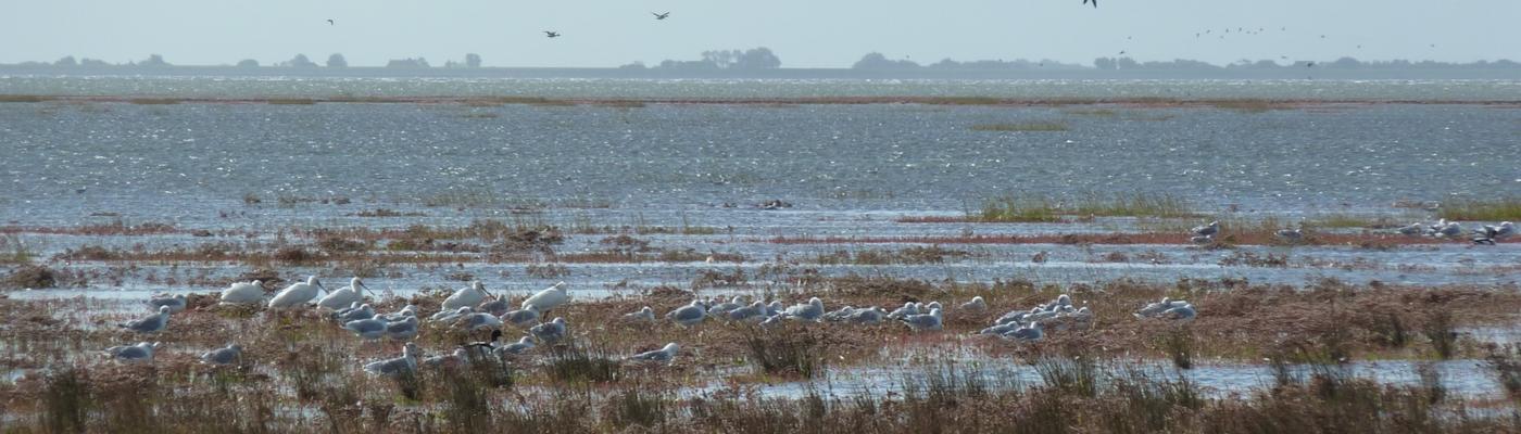Vloed vogels