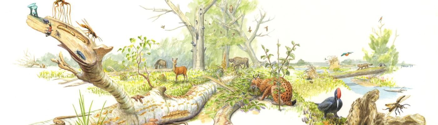 Dood hout en zijn sleutelrol in de natuur