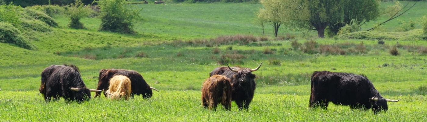 Hooglanders Wolfhaag