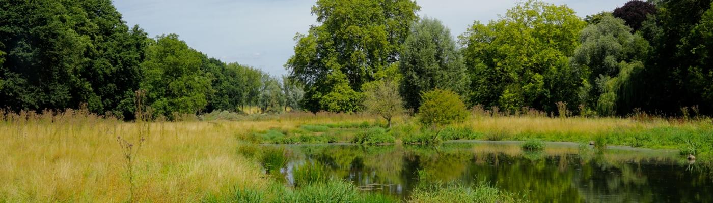 Bevermoeras langs de Hemelbeek