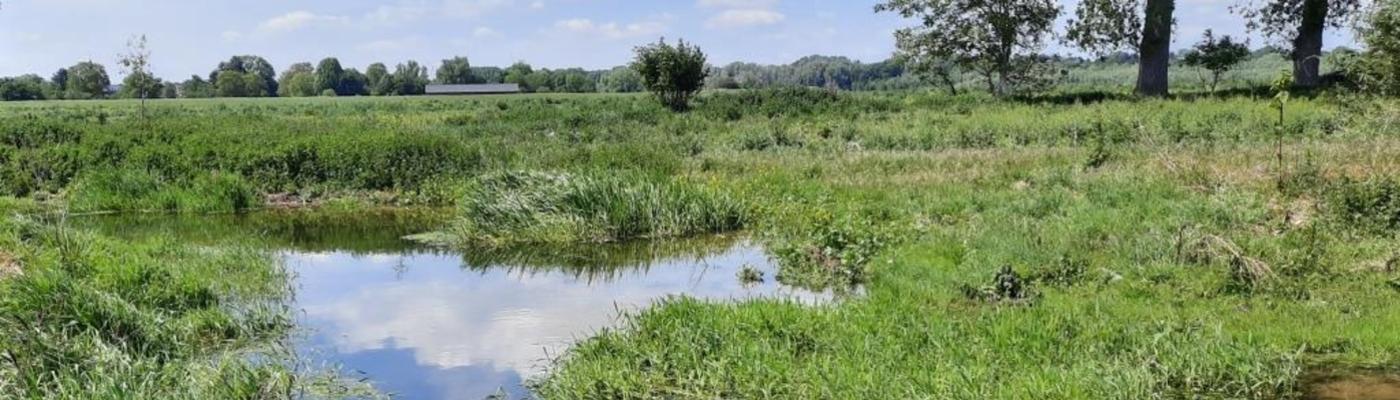 Natuurgebied bij Itteren met beverdam
