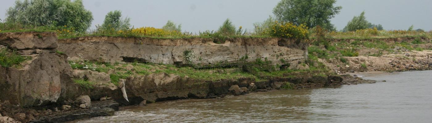 Oeverzwaluw kolonie