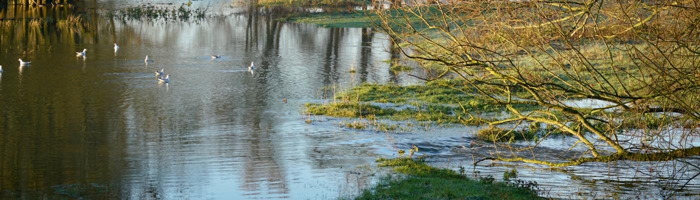 Hoogwater Gendtse Waard