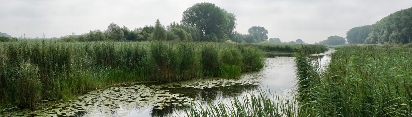 Rijnstrangen
