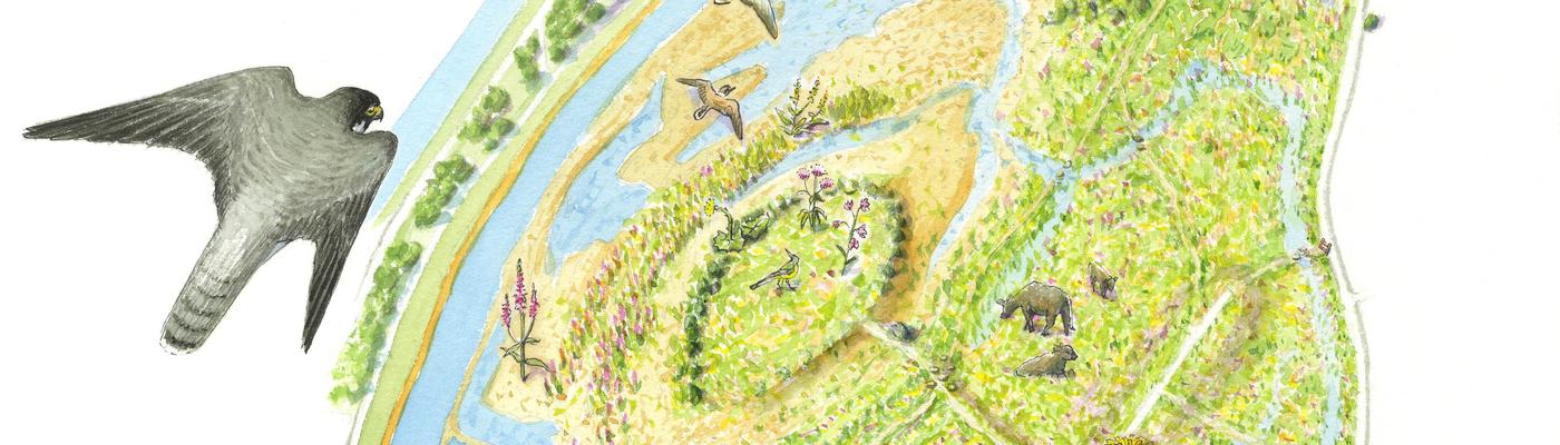 Struinkaart Grensmaas Borgharen