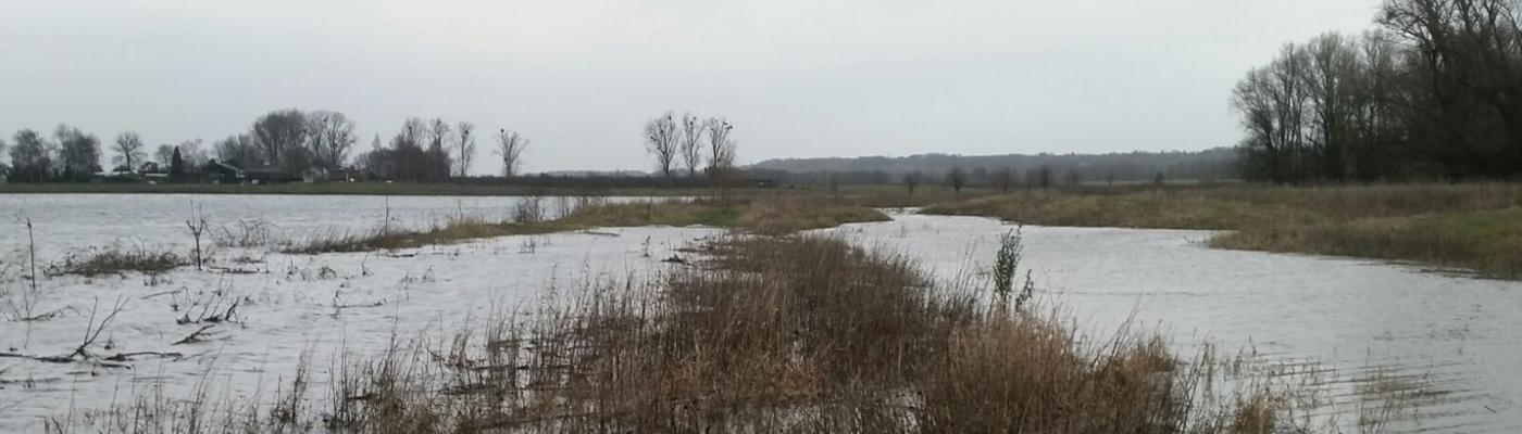 Hoogwater in de Grensmaas, foto: Patrick van den Burg, FREE Nature