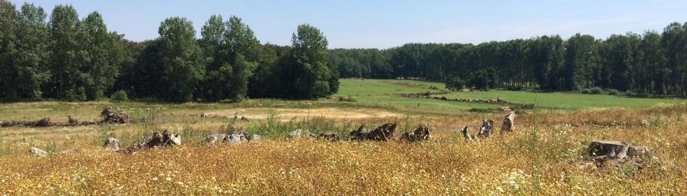 Zicht vanaf natuurbrug De Mortelen in natuurgebied Het Groene Woud