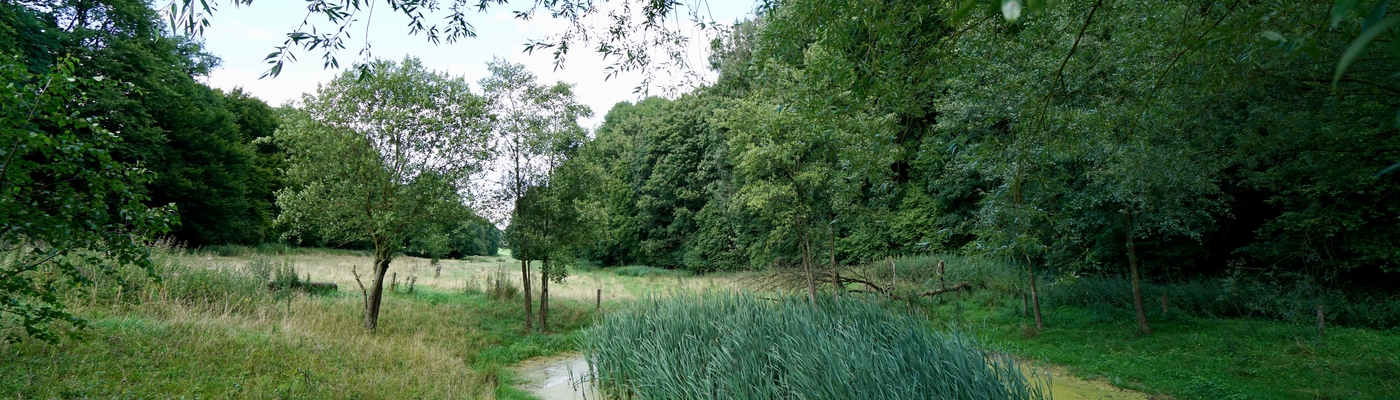 Langer vasthouden van water tegen wateroverlast en voor nieuwe natuur