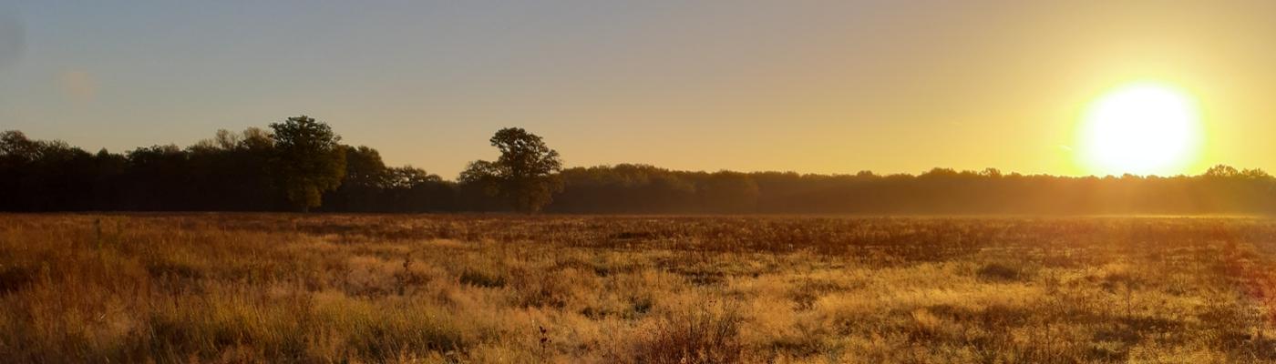 Graslanden bij zonsopkomst in het Kempen~Broek. Foto: Joep Crombag