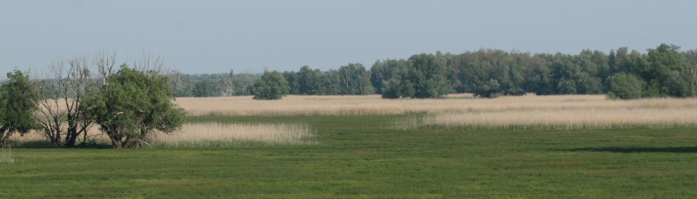 Floodplain Donau Kopacki rit