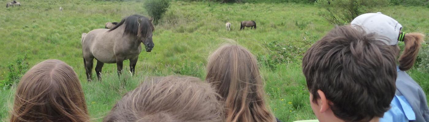 Mensen en grote grazers op de Landtong Rozenburg