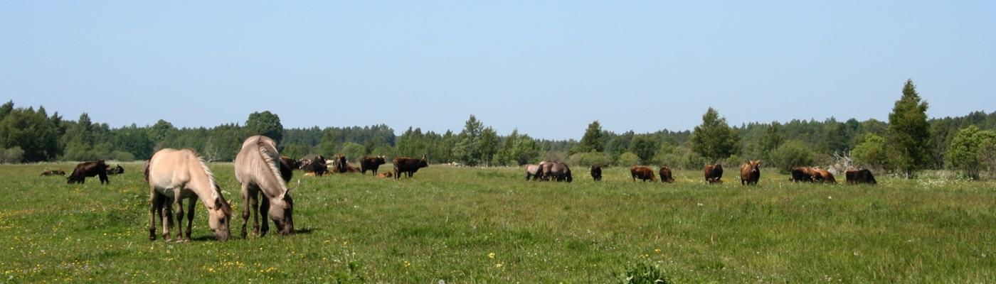 Pape Natuurpark Konik Heckrund