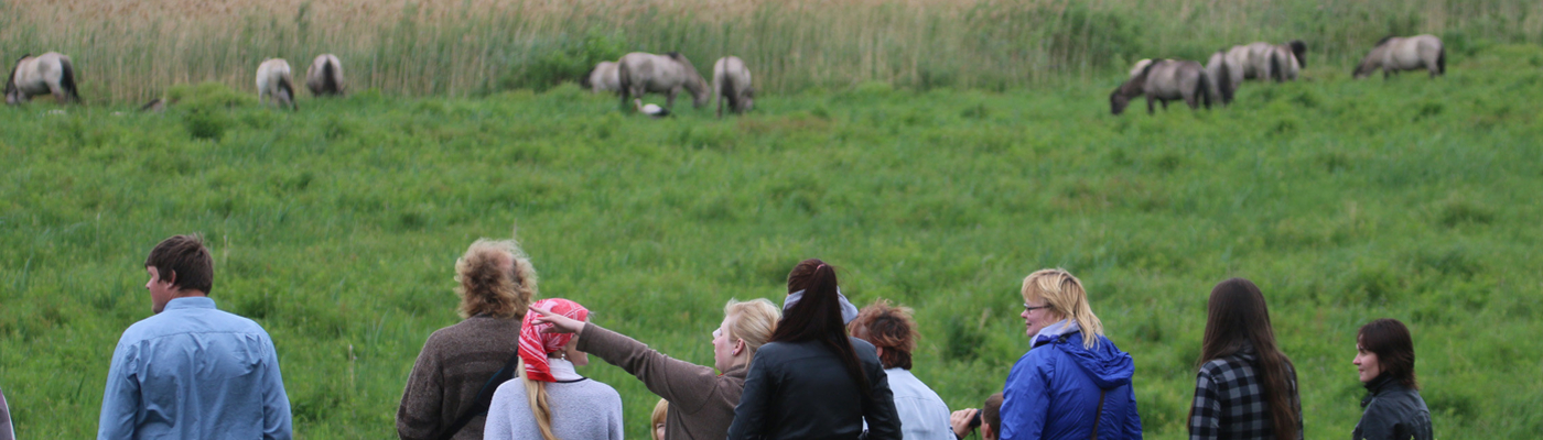 Konikpaarden in Letland