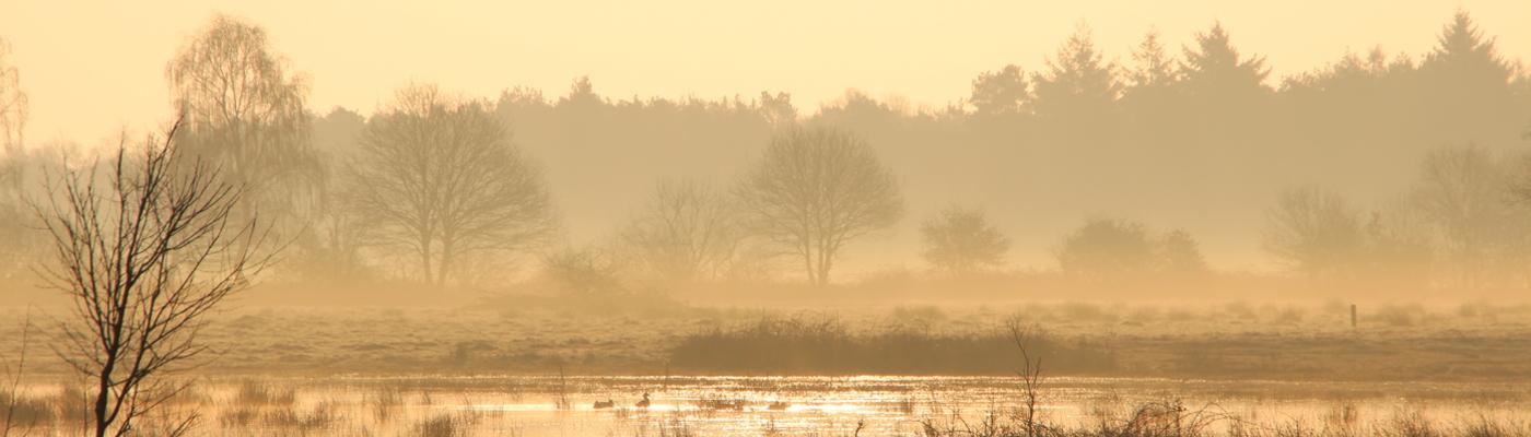 Maashorst in de ochtend, foto: Maurice van Doorn