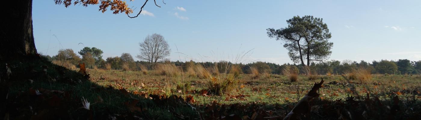 Beeld van het Begrazingsgebied in De Maashorst