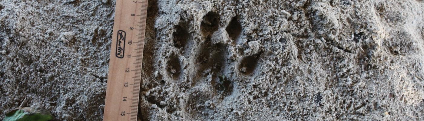 Otterspoor