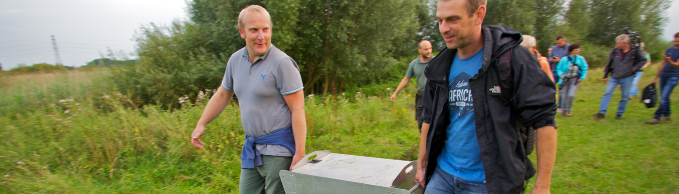 Otters bijgeplaatst in de Gelderse Poort